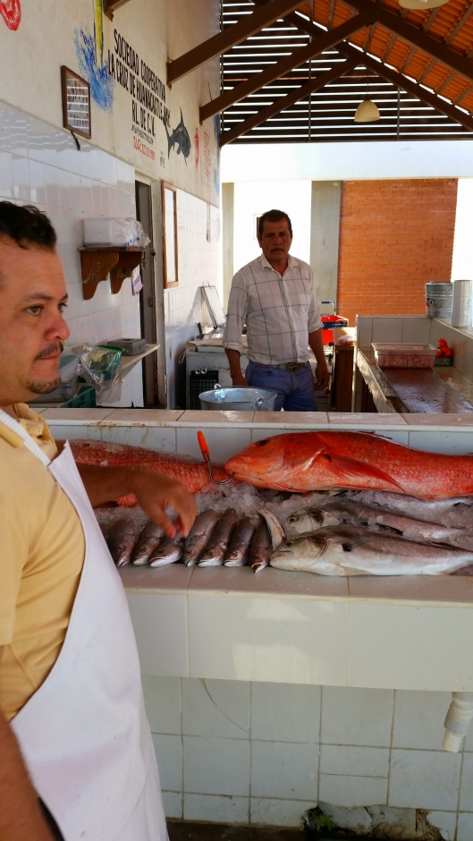 Fish market at the marina in La Cruz