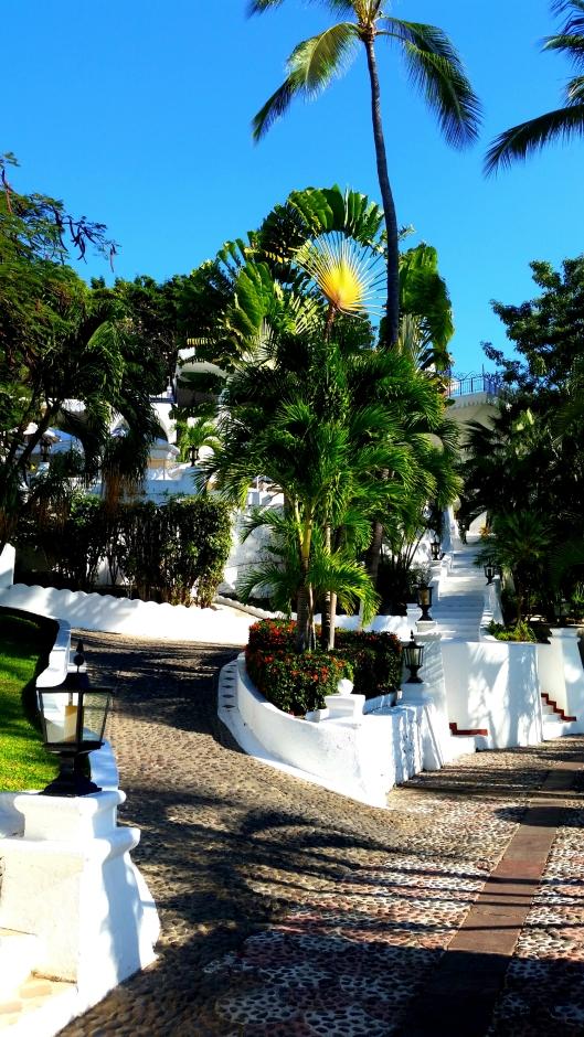 Beautiful palm trees at Las Hadas