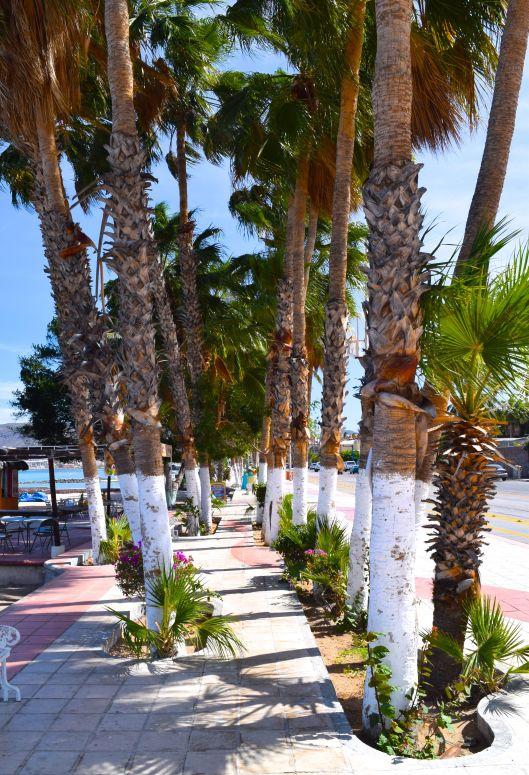 A nice shady spot along the Malecon