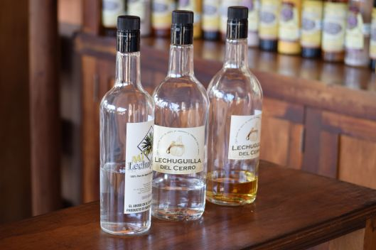 Tequila Distillery 1